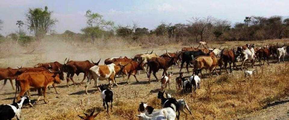 Improving sanitary capacity to facilitate livestock and meat